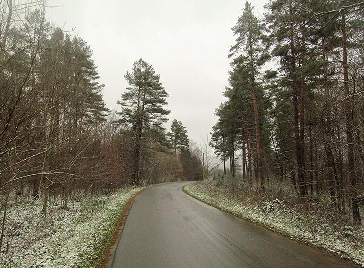 Дорога крізь ліс