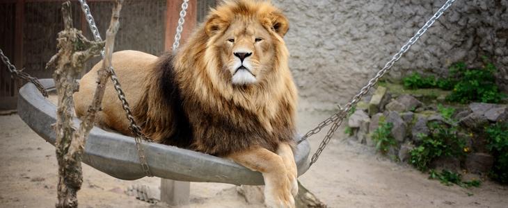 Зоопарк в Харькове